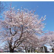 2018年3月|大空へダイブ!卒業記念の旅|宮城県 T.Y様 (18006)